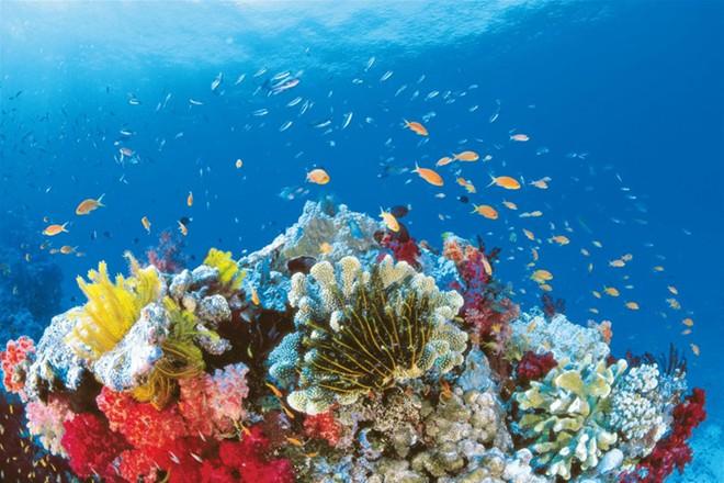 Bờ biển Ningaloo cũng là nơi tranh luận bảo tồn xung quanh tiềm năng việc phát triển du lịch tiềm năng. Ảnh: Australia.