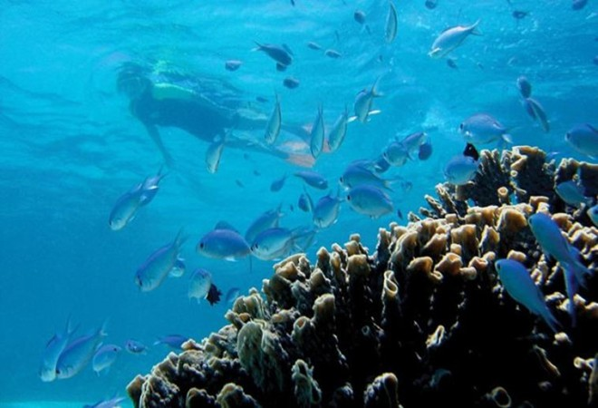 Năm 2011, UNESCO công nhận Ningaloo và các khu vực xung quanh là Di sản thế giới. Ảnh: Lovebirds.