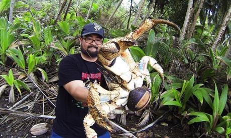 Mark và cua dừa khổng lồ