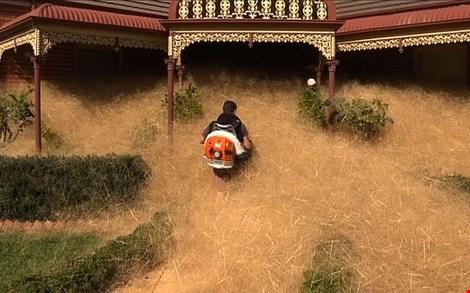 Cỏ lăn tràn ngập nhà dân ở thị trấn Wangaratta, Úc (Ảnh: AFP)