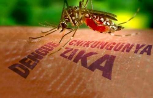 14-nguoi-uc-nhiem-virus-zika