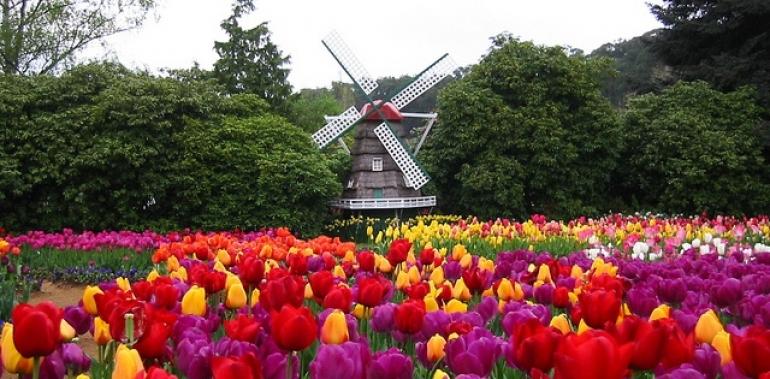 Kết quả hình ảnh cho Khám phá lễ hội hoa Tulip Tesselaar Úc, nơi muôn hoa khoe sắc