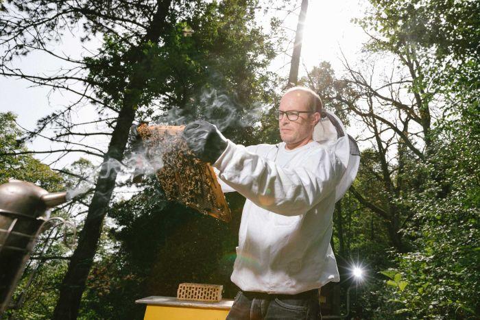 9012092 3x2 large - Mật ong của Úc tốt, và hơn 75% mật ong trên toàn thế giới dư lượng thuốc diệt côn trùng