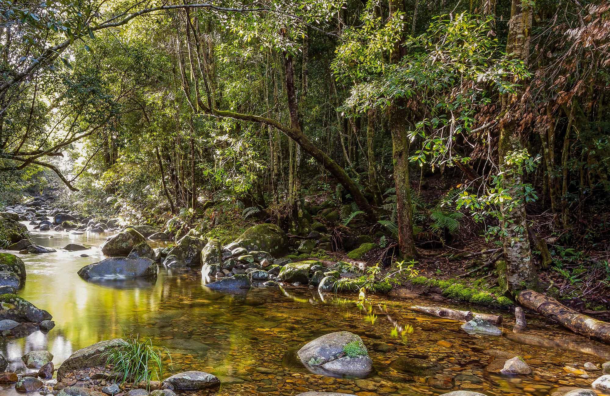 frogs gondwana background - Du lịch Gold Coast, 8 điều bạn cần PHẢI BIẾT