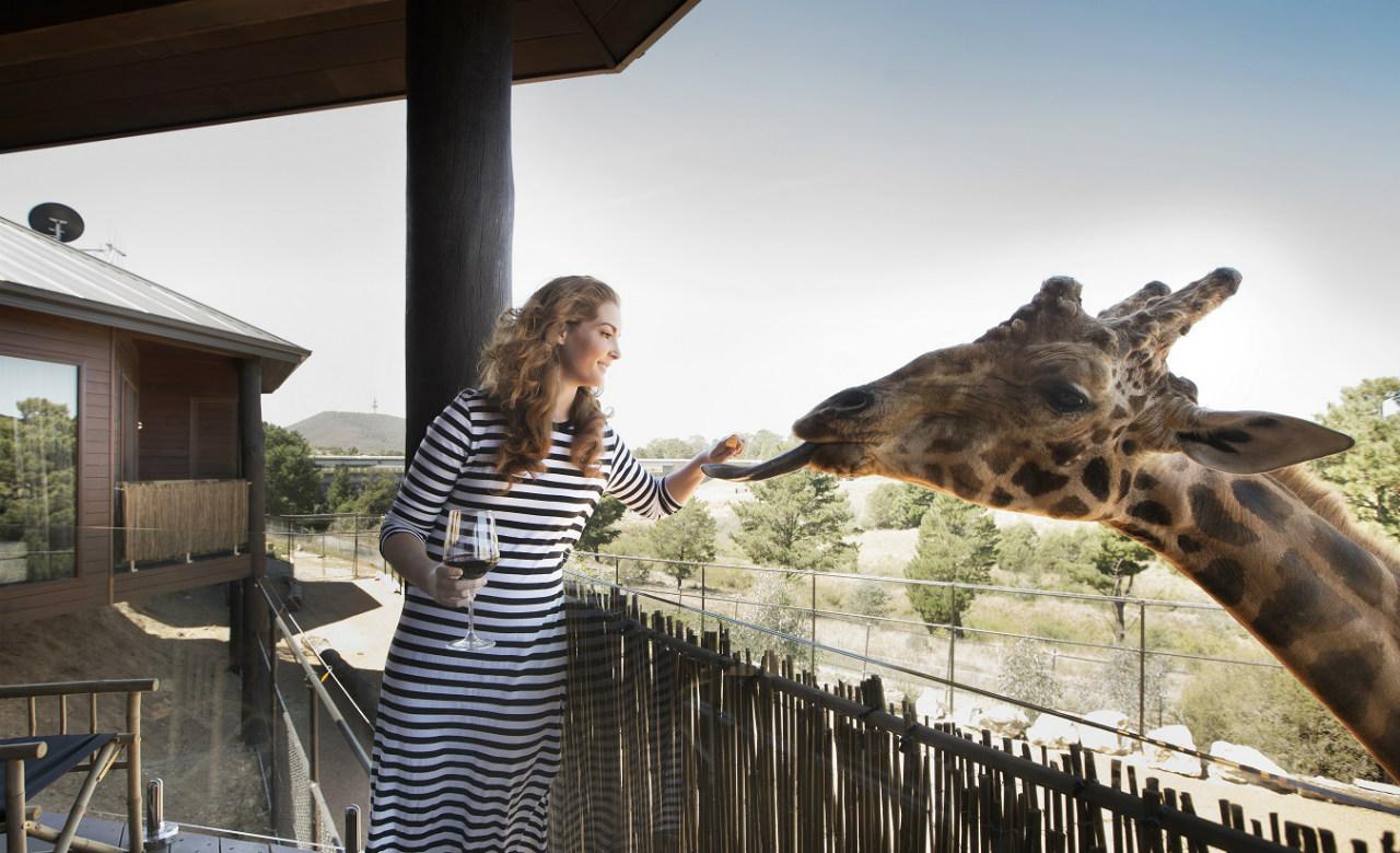 """jamala giraffe lodge 1 - Những treehouse gần Sydney khiến bạn chỉ muốn """"đưa nhau đi trốn"""""""