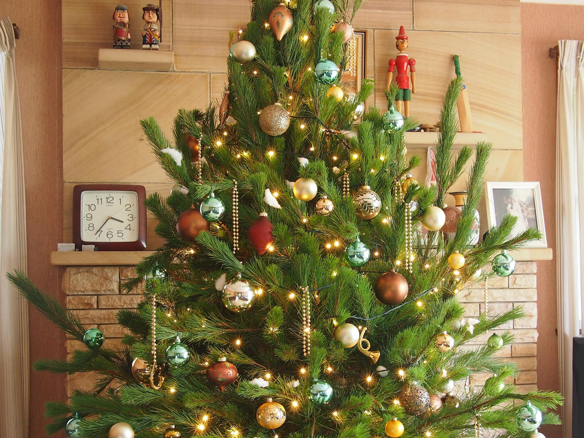 Elf Help - Ở Sydney thì mua cây thông Giáng Sinh ở đâu?