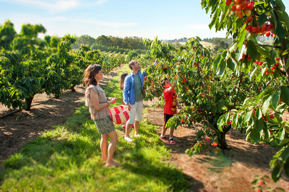 cherryhill-orchards-feature