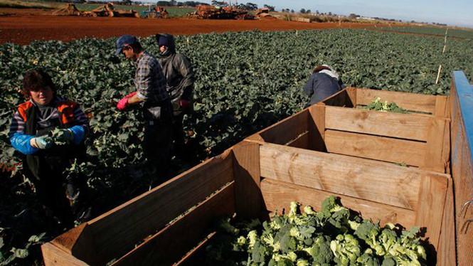 uc nqvt - Người Việt bị bóc lột tiền lương khi lao động tại Úc