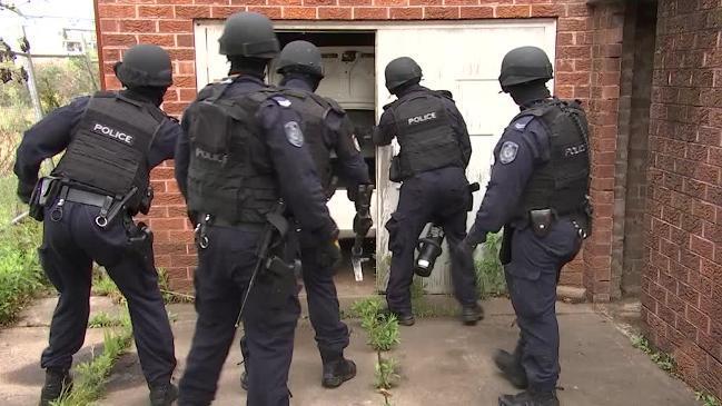 1 1 - Cảnh sát triệt phá đường dây trồng cần sa quy mô lớn ở Sydney