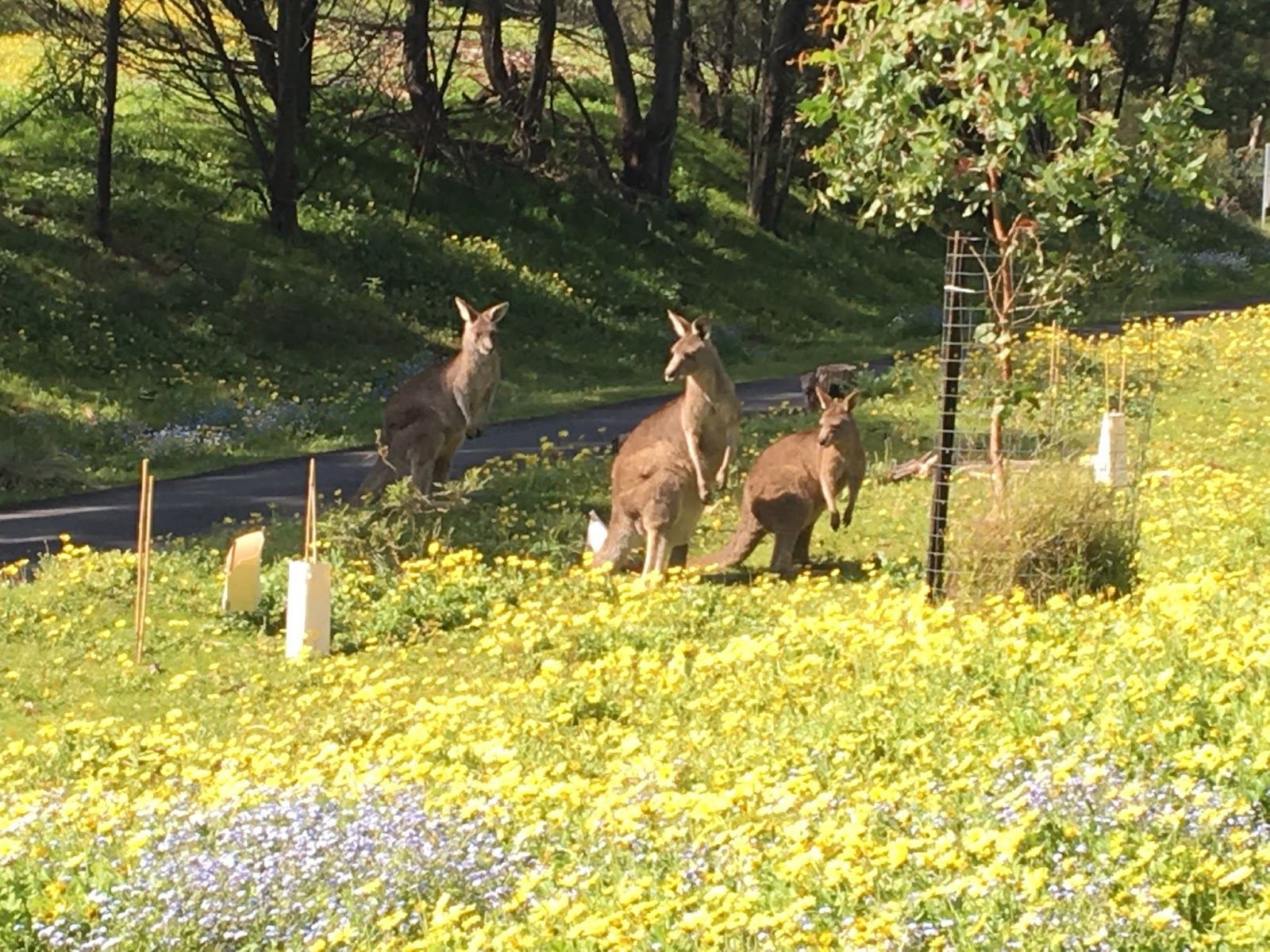 """Tower Hill Wildlife Reserve walk - Top 5 địa danh """"bí ẩn"""" ở Victoria bạn cần check-in ngay"""