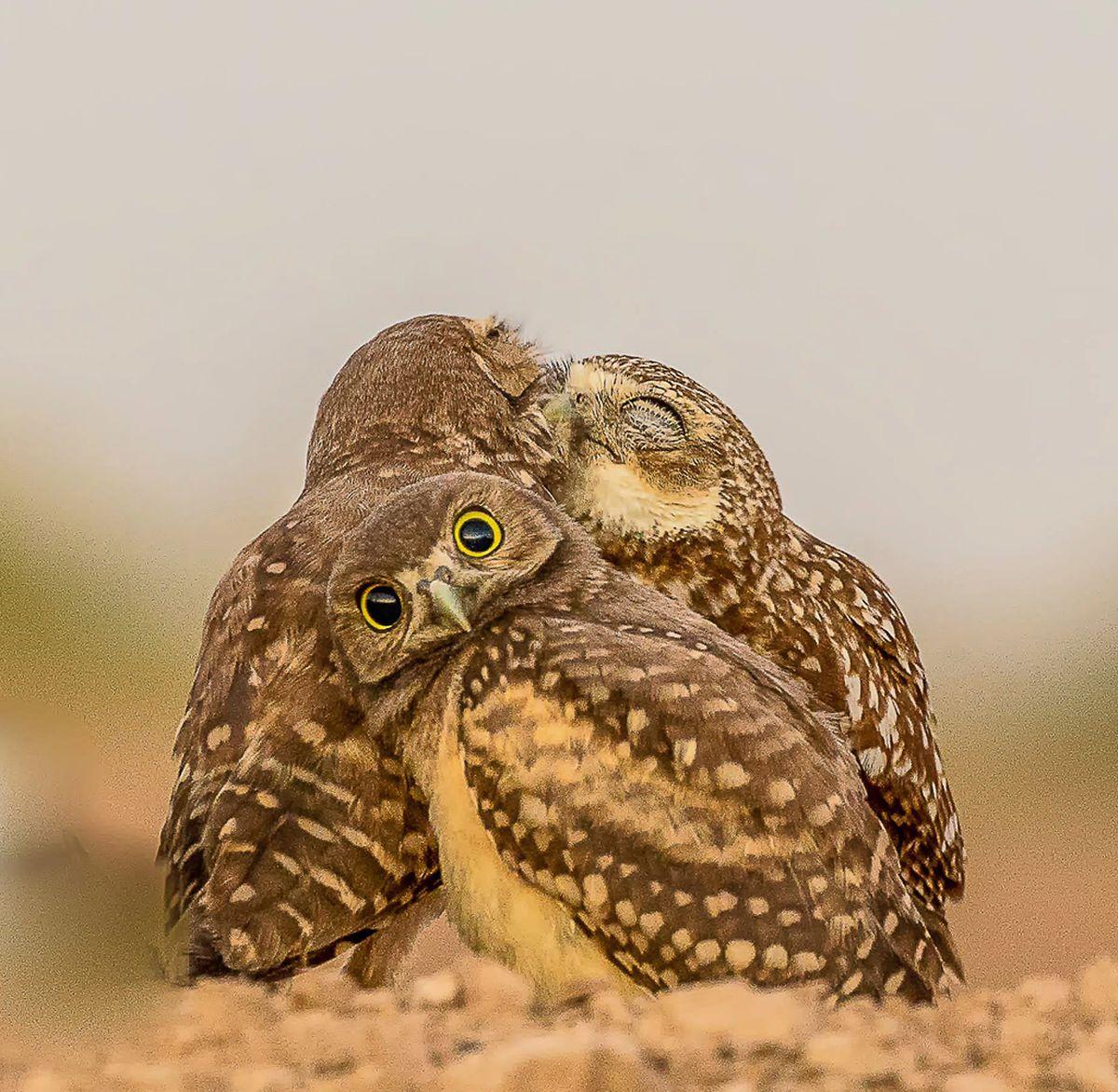 http 2F2Fprod.static9.net .au2F 2Fmedia2F20172F122F192F112F182F26 comedywildlife - Những bức ảnh động vật hoang dã thú vị nhất năm 2017