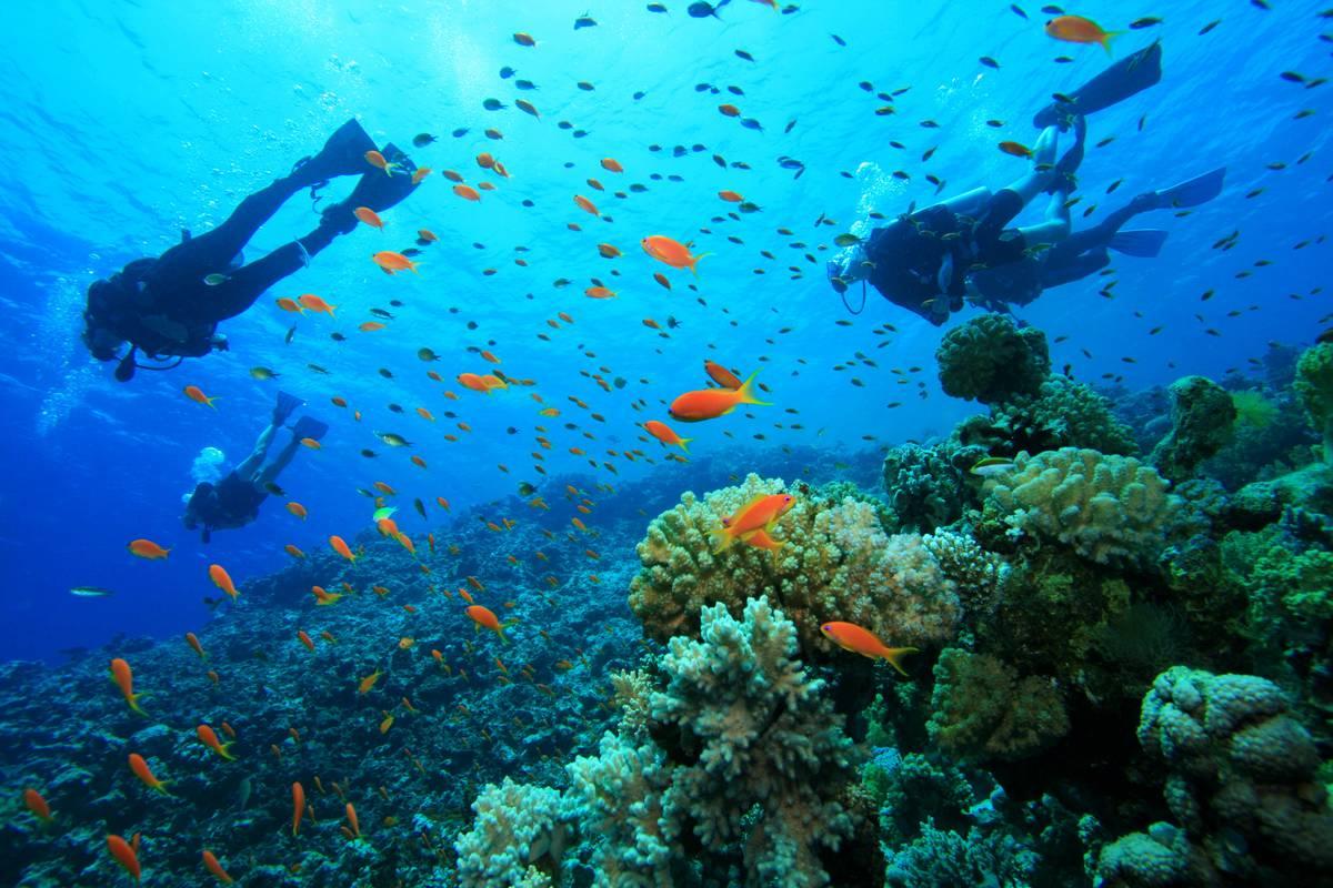 Ningaloo Reef Tauchen - Khám phá TOP 10 bãi biển đẹp nhất Tây Úc