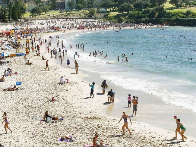 bacterial contamination at Coogee