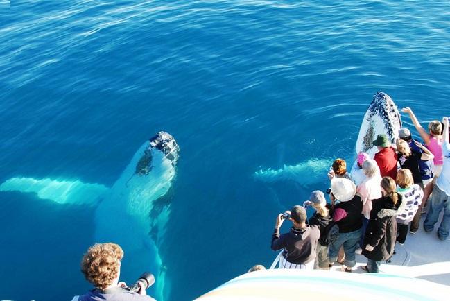 ca voi lung gu du lich australia mixtourist - Những điều vô giá nên trải nghiệm ở Úc