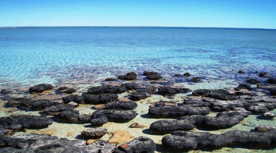 rsz shark bay   acc   hamelin pool stromatolites 900x500 - Khám phá TOP 10 bãi biển đẹp nhất Tây Úc