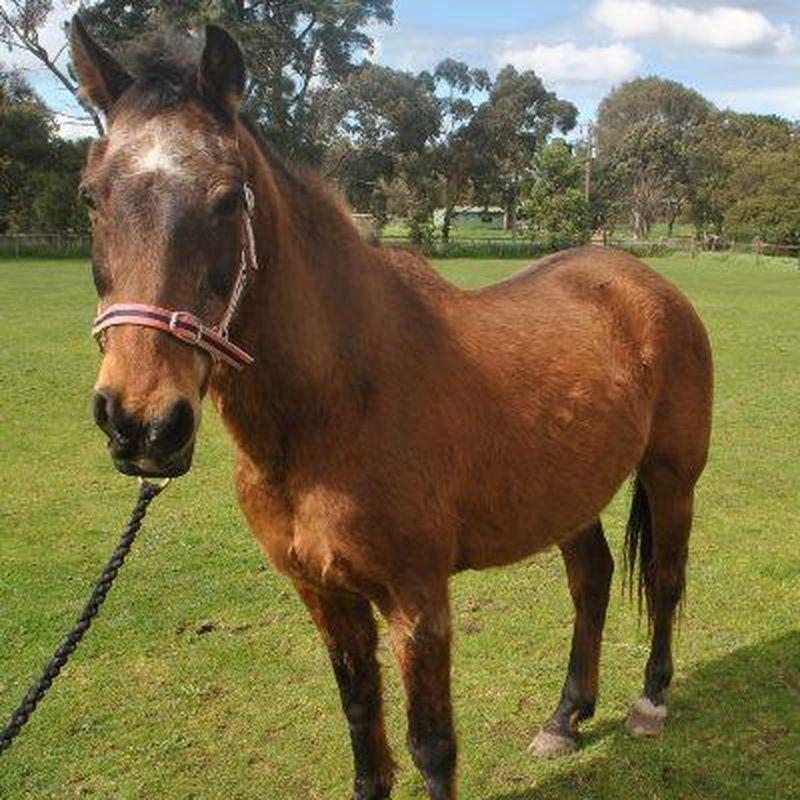 Squeak is available in Victoria. RSPCA - RSPCA giảm mạnh phí nhận thú nuôi vào dịp cuối tuần