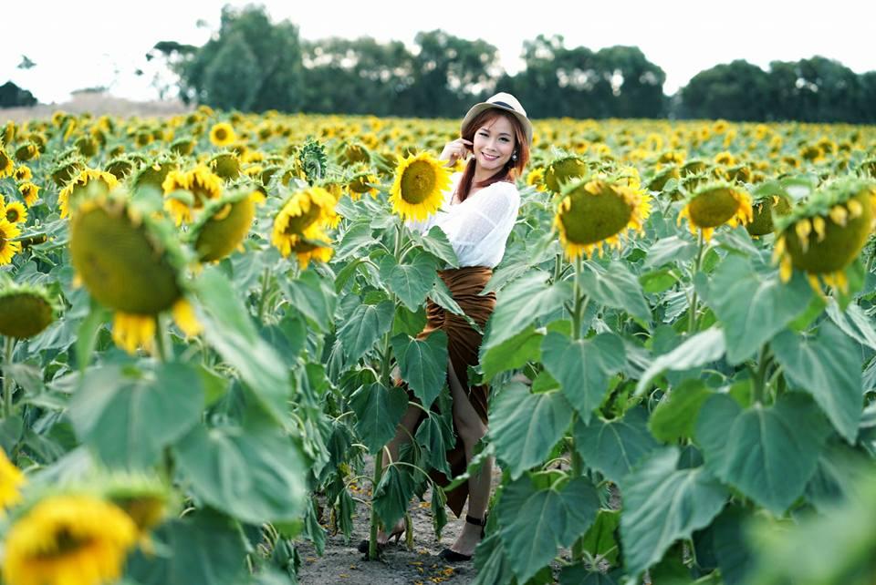 28468610 10212063144793690 3579196026357248532 n - Rực rỡ cánh đồng hoa hướng dương ở Victoria