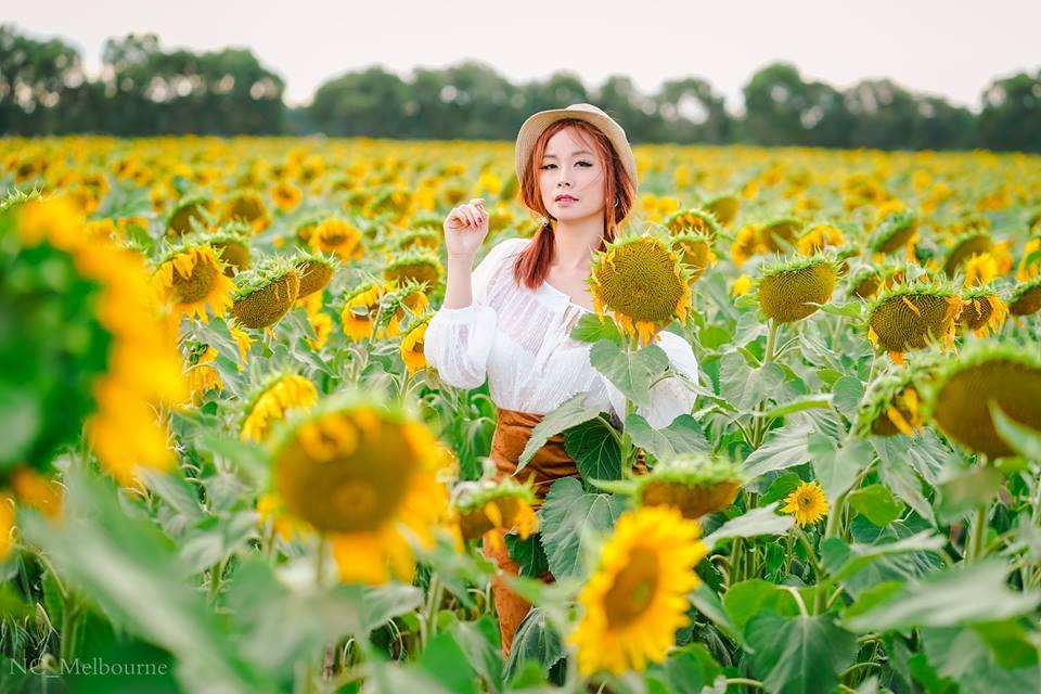 28535673 10212071221715608 190210589 n - Rực rỡ cánh đồng hoa hướng dương ở Victoria