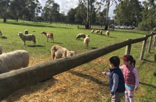 """yH5BAEAAAAALAAAAAABAAEAAAIBRAA7 - Cuối tuần, đưa cả nhà đi trốn tại những nông trại """"ảo diệu"""" khắp Melbourne này nhé!"""