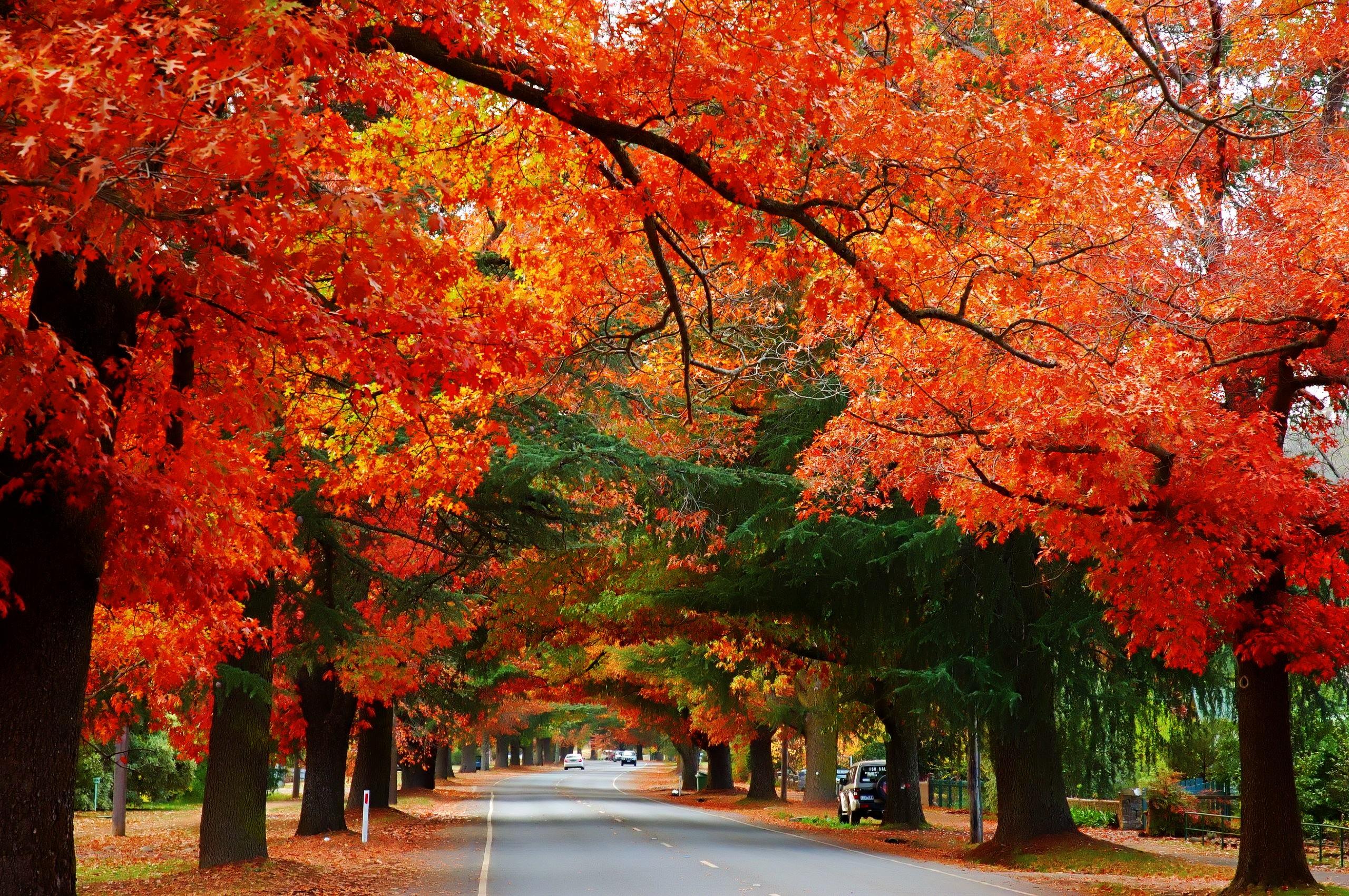 Bright Autumn, Bright, Victoria