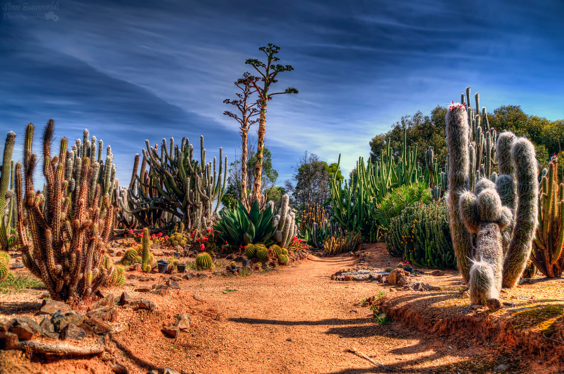 Cactus Country