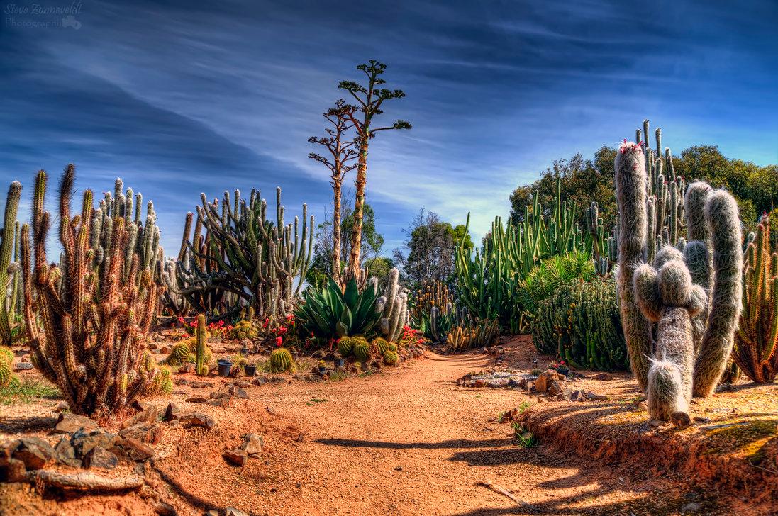 Cactus Country - 8 khu vườn tuyệt đẹp ít người biết đến ở Melbourne