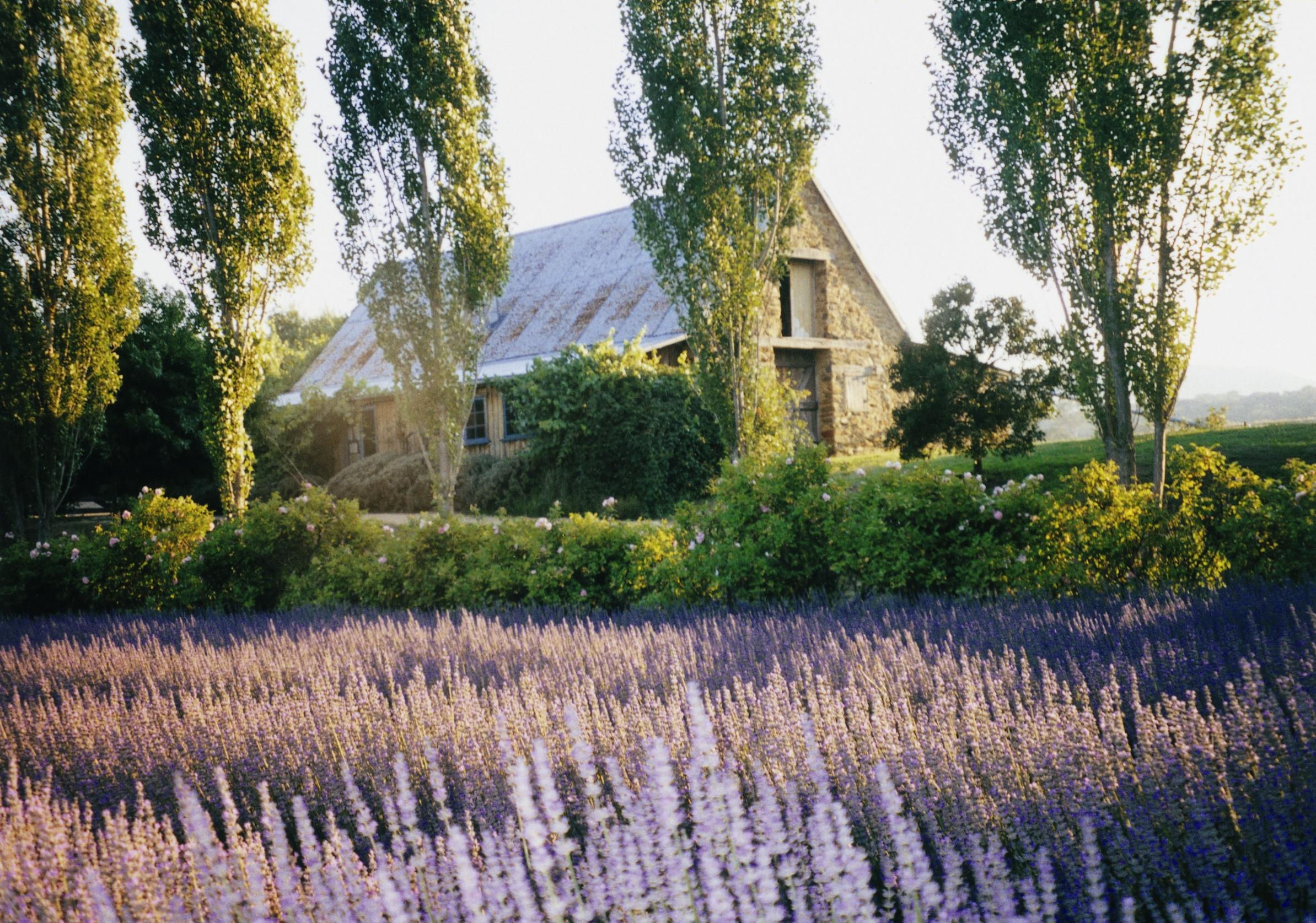 Lavandula Swiss Italian Farm1 - 8 khu vườn tuyệt đẹp ít người biết đến ở Melbourne