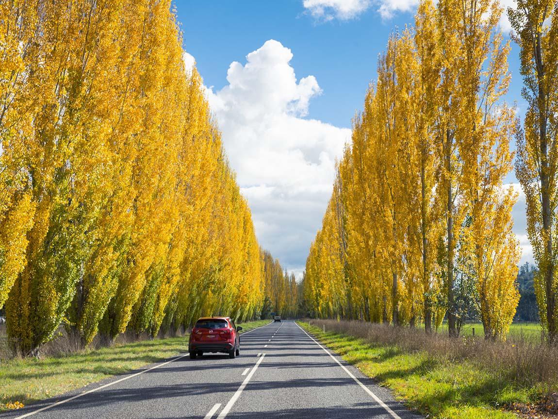 """yH5BAEAAAAALAAAAAABAAEAAAIBRAA7 - 5 địa điểm ngắm thu lá đỏ """"tuyệt vời"""" nhất ở khắp nước Úc"""