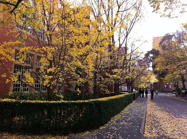 mua thu uc day lang man o truong dai hoc melbourne 12 - Mùa Thu Úc đầy lãng mạn ở trường Đại học Melbourne