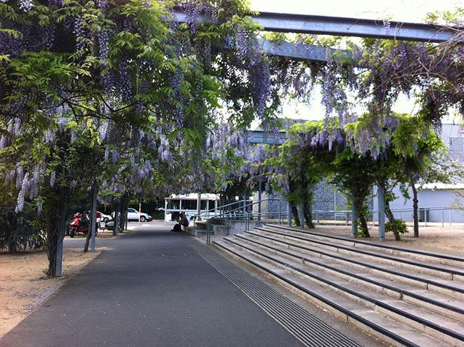 mua thu uc day lang man o truong dai hoc melbourne 4 - Mùa Thu Úc đầy lãng mạn ở trường Đại học Melbourne
