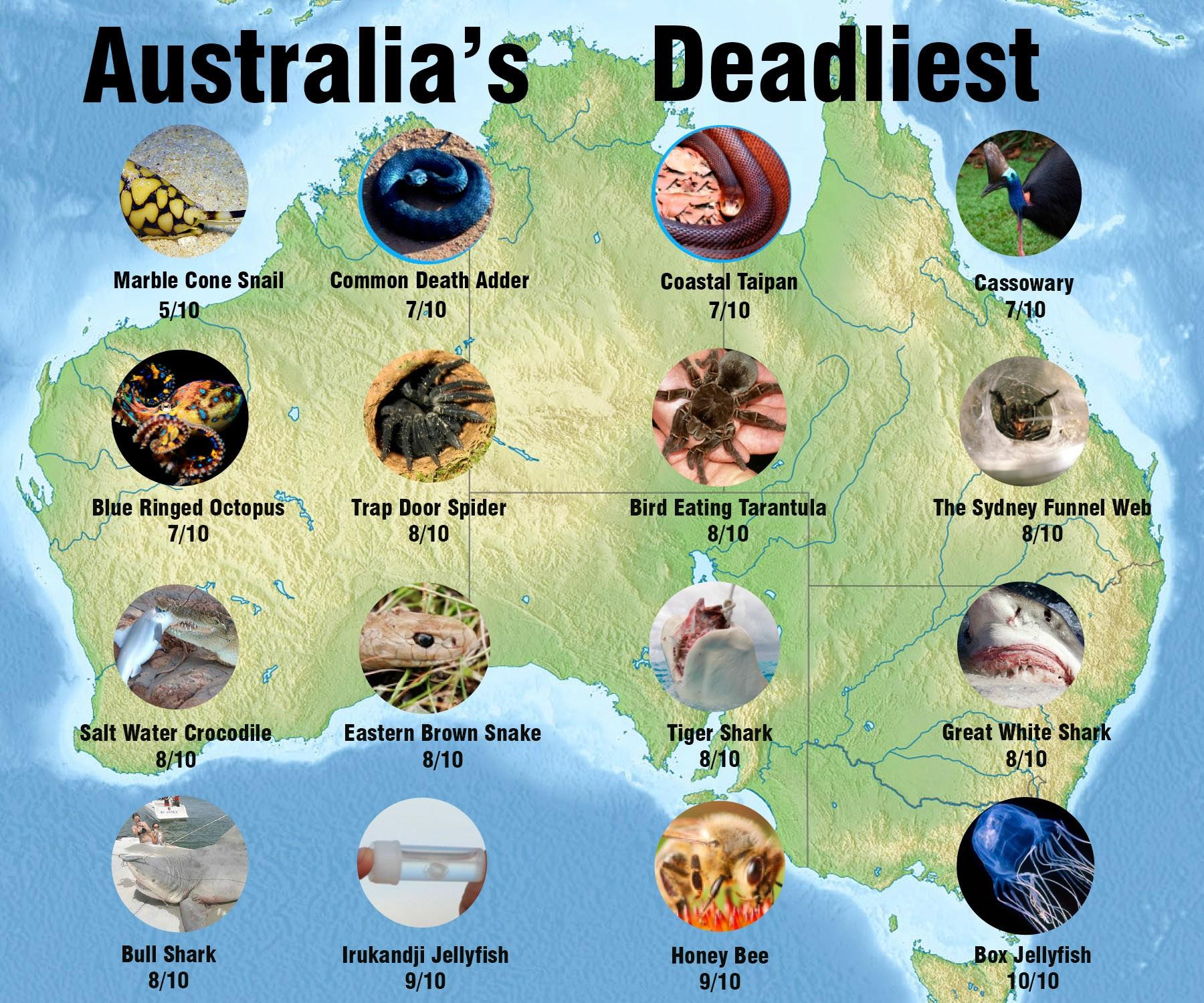 """deadly animals - 10 """"mặt xấu"""" của nước Úc có thể bạn chưa biết"""