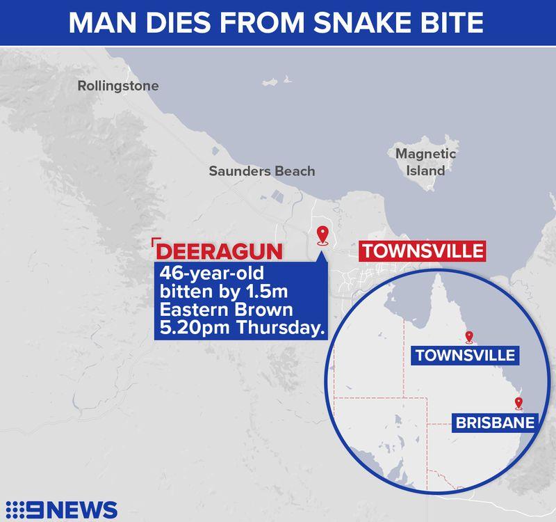 http 2F2Fprod.static9.net .au2F 2Fmedia2F20182F042F202F112F082FSNAKEBITE - Người đàn ông Úc tử vong ngay trước mặt gia đình do bị rắn nâu cắn