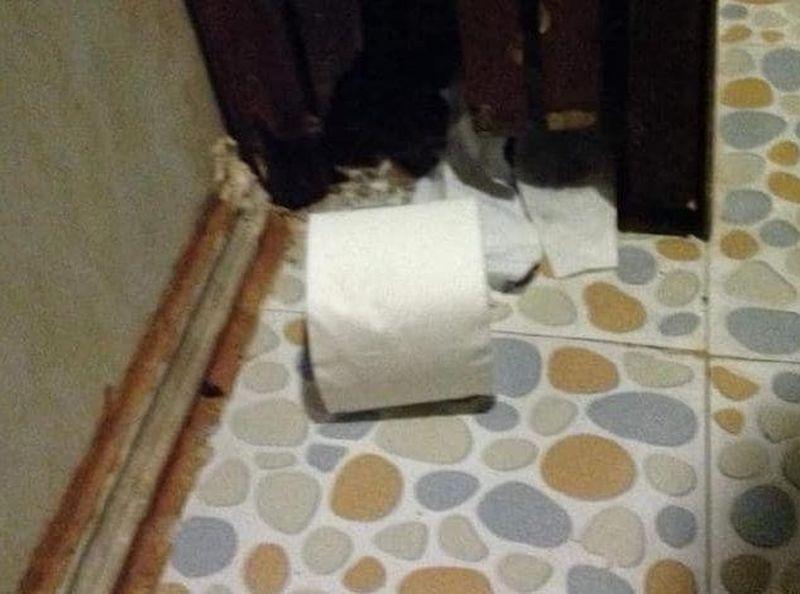 Giấy vệ sinh lăn lóc dưới nền