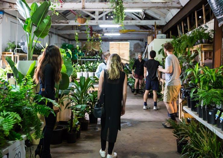 greener house melbourne plants - Cuối tuần với hội chợ nội thất mùa đông giá rẻ