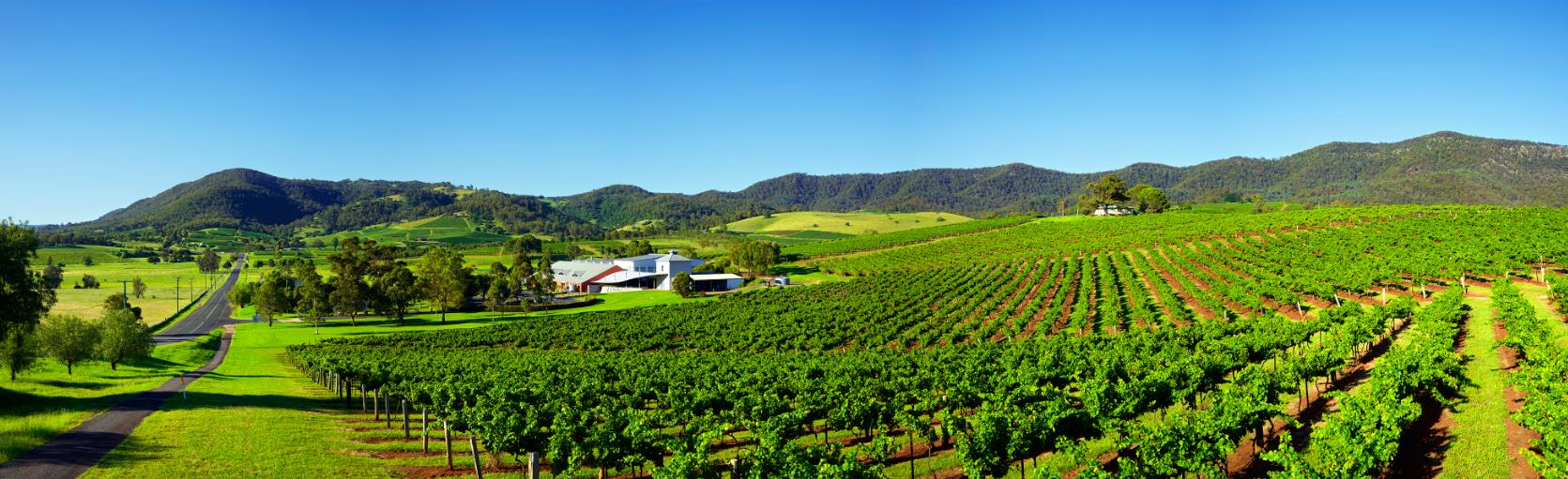 sydney vineyards
