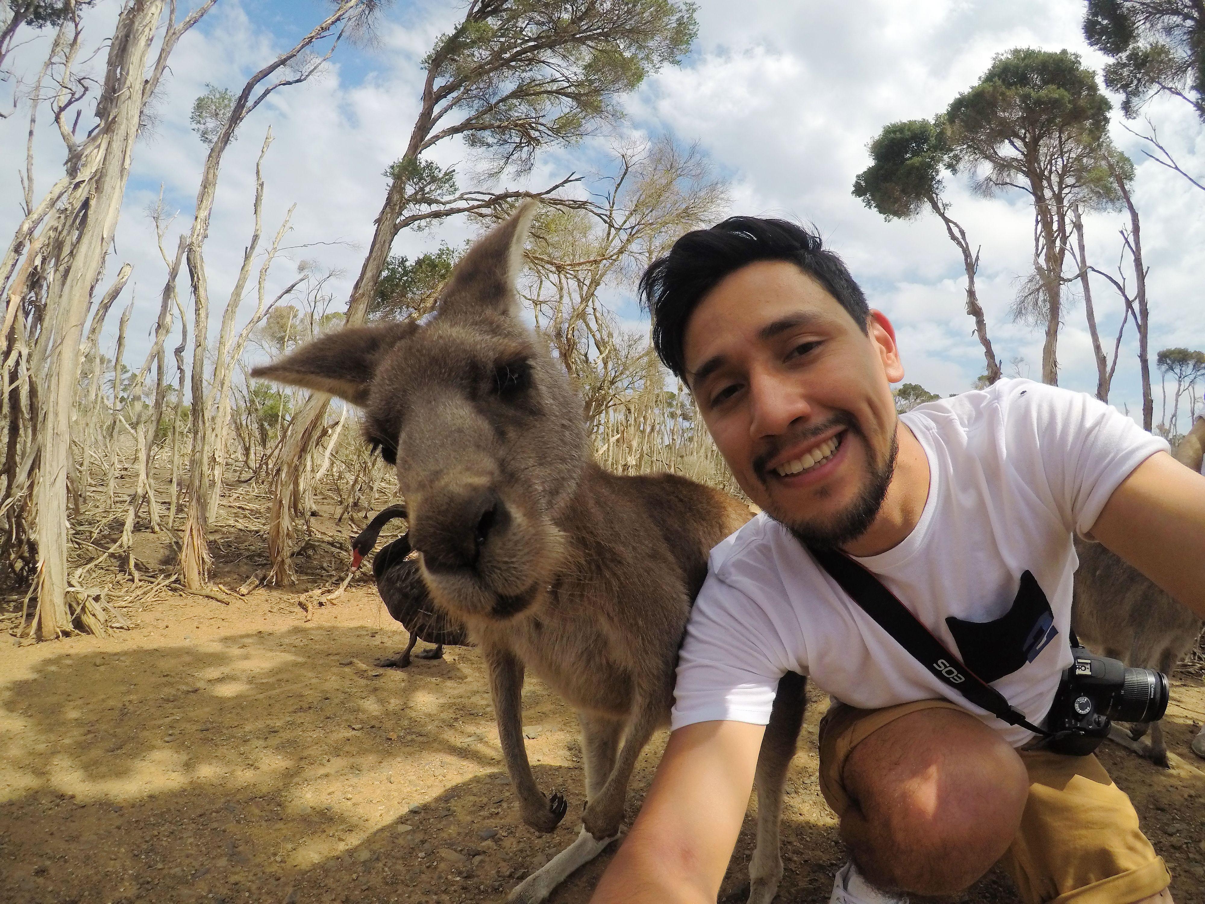 selfie with kangaroo