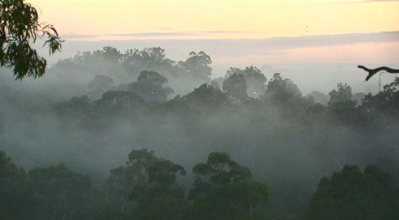 http 2F2Fprod.static9.net .au2F 2Fmedia2F20182F062F062F112F352Ffog2 - Melbourne khởi đầu mùa đông lạnh nhất kể từ năm 1982 đến nay