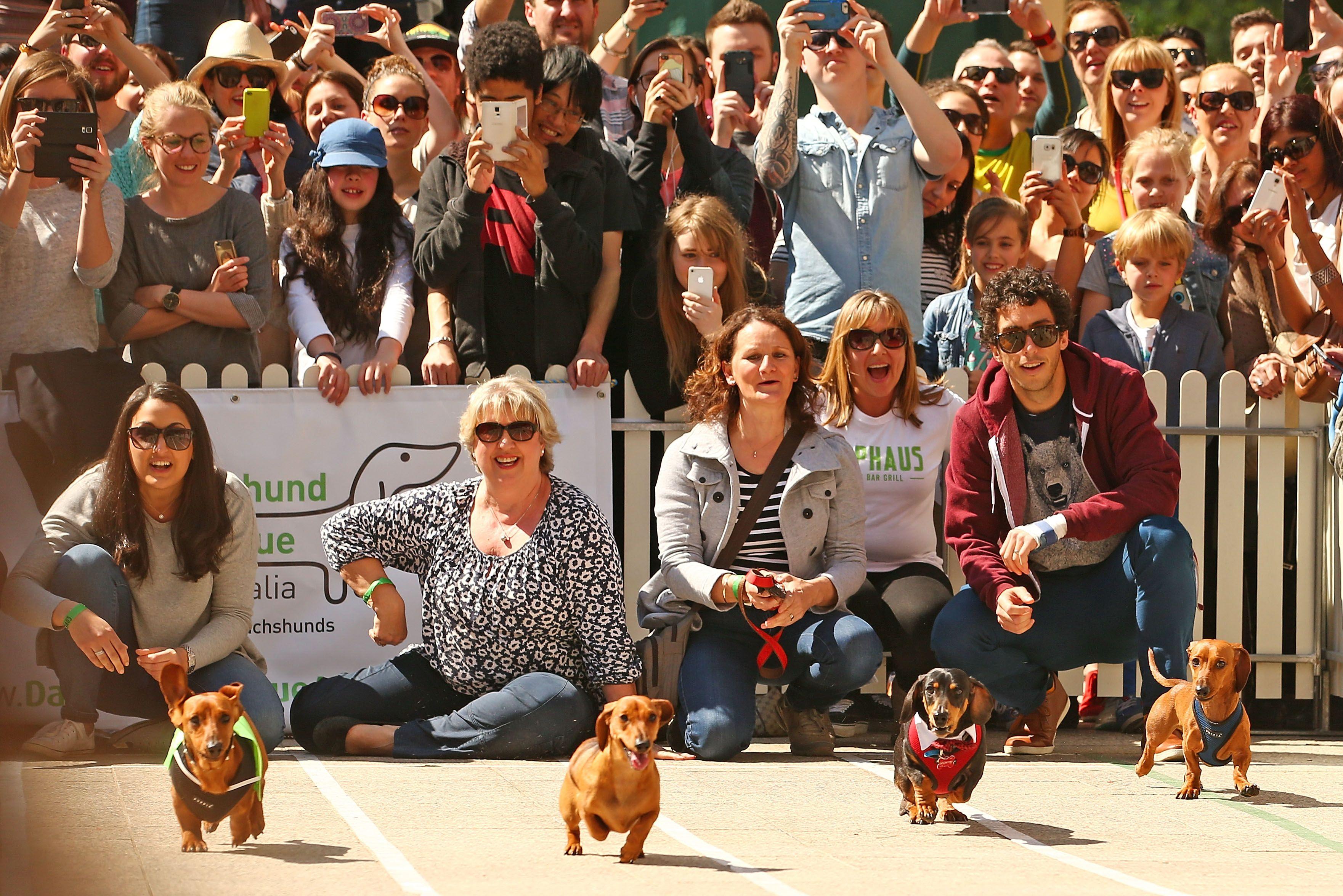 Hophaus Annual Dachshund Race