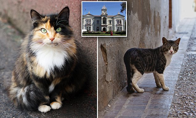 sydney ban cats from going outside