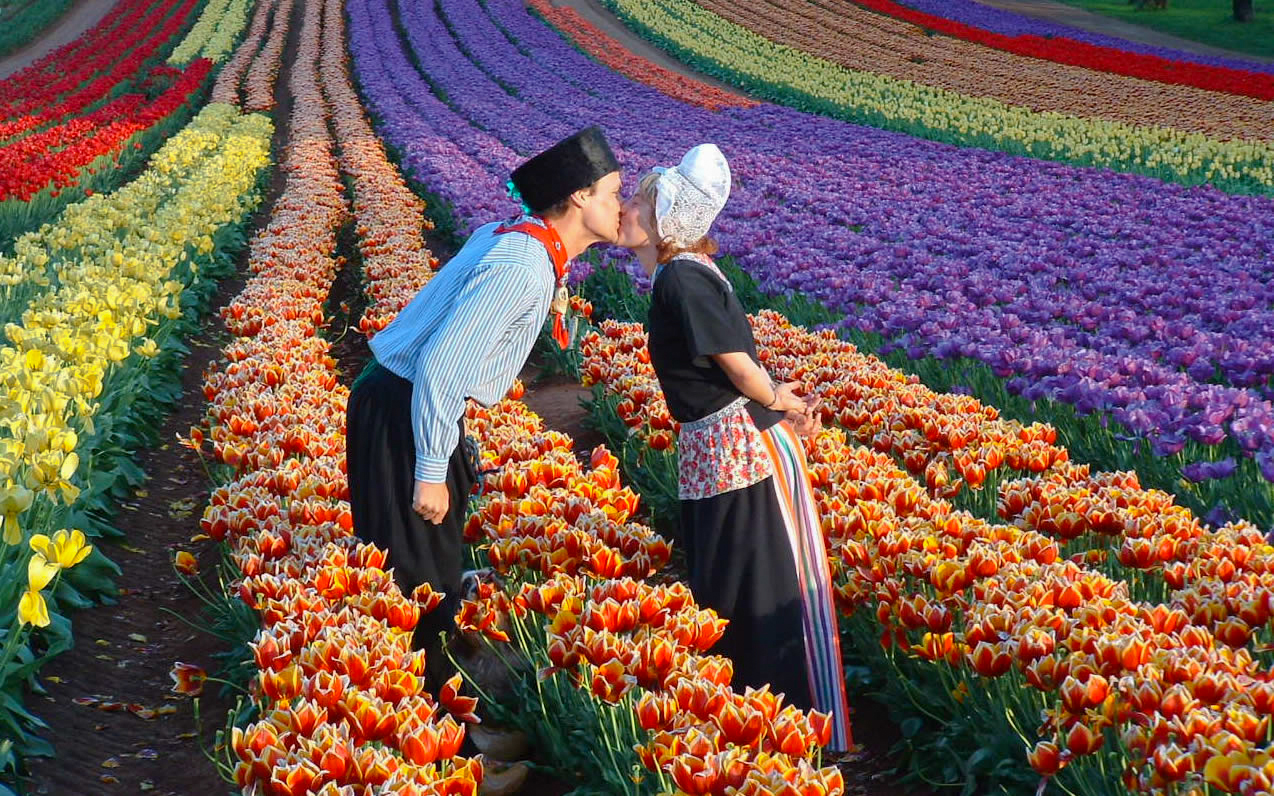 The Tulip Farm