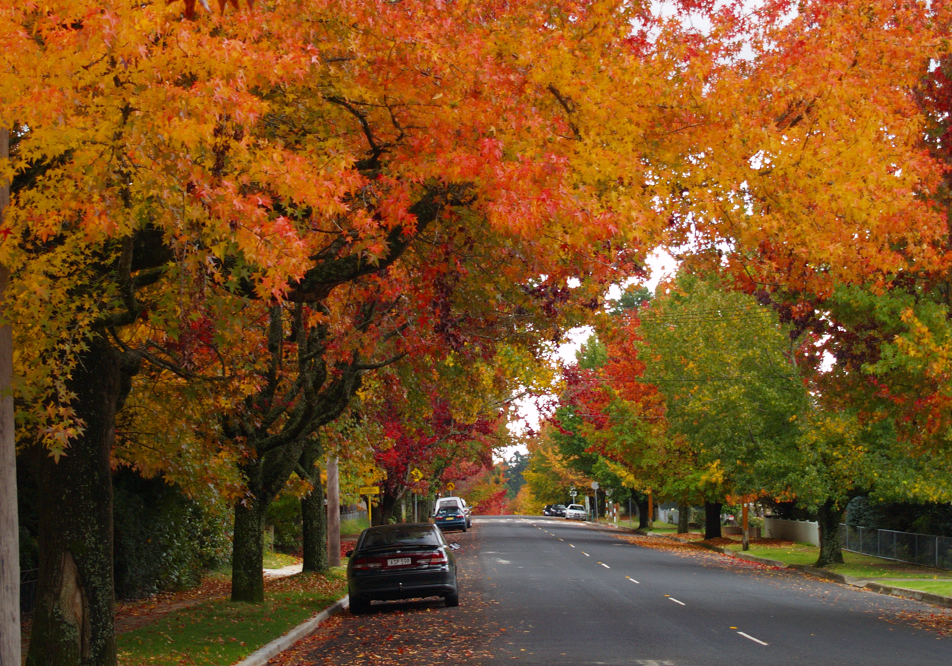 Best places to see autumn leaves in New South Wales